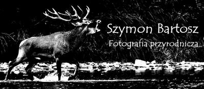 Szymon Bartosz - Fotografia przyrodnicza / Wildlife photography